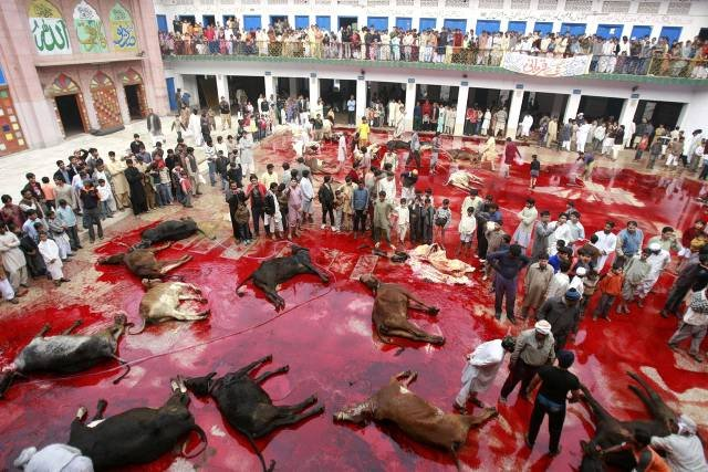 Muslims slaughter bulls during Eid-al-Adha festival in Lahore